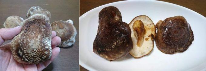 らでぃっしゅぼーやのしいたけをステーキで食べる